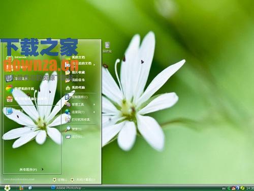 护眼白花XP电脑主题