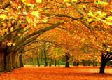收获季节秋天枫叶壁纸